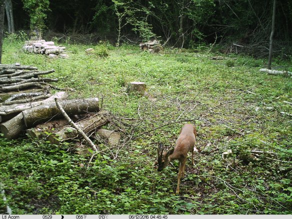 IMAG0045 Deer Coppice Cam