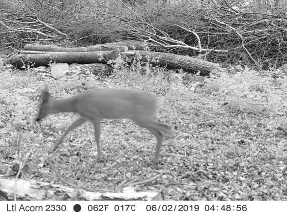 23300031 Deer